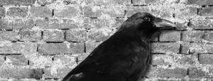 crow_wall-1170x450